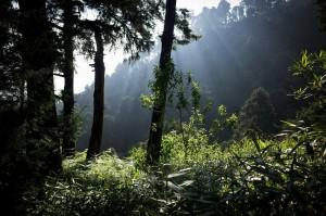 hutan-dieng